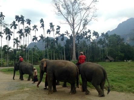 Bye Elephants