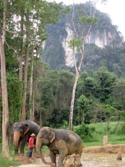 5.1454025600.elephant-experience