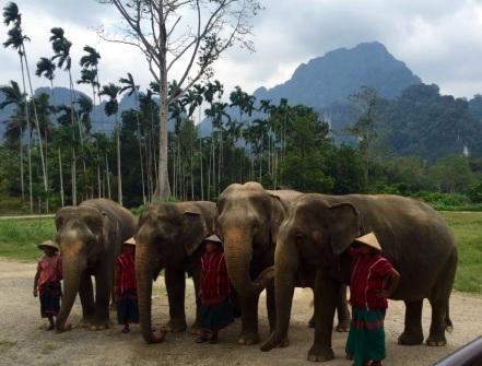 5.1454025600.elephants-amp-handlers
