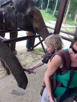5.1454025600.feeding-sugarcane-to-elephants