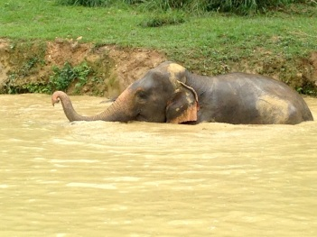 5.1454025600.this-elephant-loved-the-water