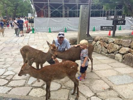 5.1475539200.so-many-deer