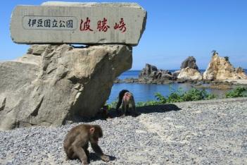 5.1473033600.monkey-paradise-at-cape-hagachi